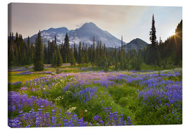 Canvas print  Lupine in flower meadow at sunrise - Gary Luhm