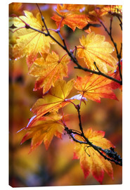 Canvas print  Maple leaves in autumn - Janell Davidson