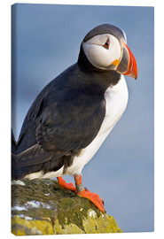 Ralph H. Bendjebar - Atlantic Puffin