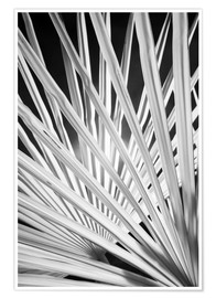 Premium poster Black and white palm fronds