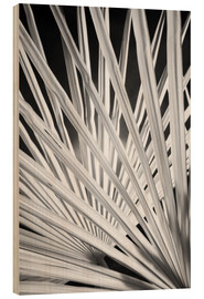 Wood print  Black and white palm fronds - Adam Jones
