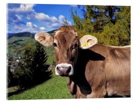 Acrylic print  Cow in the Dolomites - Ric Ergenbright