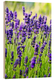 Wood print  Lavender on a meadow - Rob Tilley