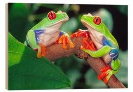 Wood print  Two red-eyed tree frogs - David Northcott