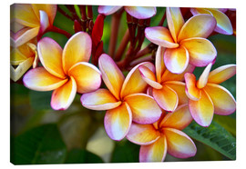Canvas print  Frangipani flowers - Mark Williford