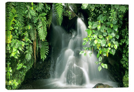 Canvas print  Small waterfall in the rainforest - Kevin Schafer