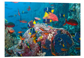Foam board print  Tropical underwater world - Paul Souders