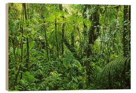 Wood print  Look in the jungle - Kevin Schafer