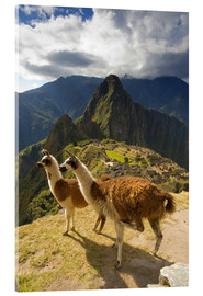 Acrylic glass  Llamas and a view of Machu Picchu - Howie Garber