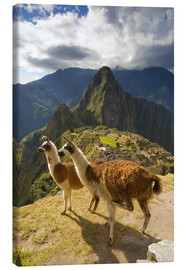 Canvas  Llamas and a view of Machu Picchu - Howie Garber