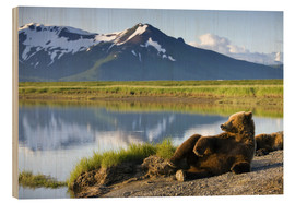 Wood print  Brown bear relaxes at the lake - Paul Souders