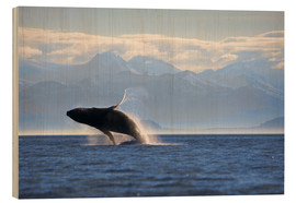 Wood print  Humpback whale jumps out of water - Paul Souders