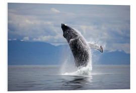 Foam board print  Humpback whale in the jump - Paul Souders