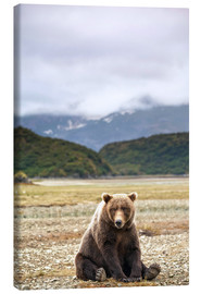 Canvas print  Grizzly Bear is resting in front of Kinak Bay - Paul Souders