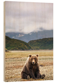 Wood print  Grizzly Bear is resting in front of Kinak Bay - Paul Souders