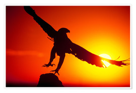Premium poster  A golden eagle flies at dawn - Dave Welling