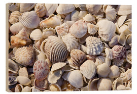 Wood print  Shell collection - Rob Tilley