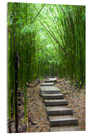 Acrylic glass  Wooden path through a bamboo forest - Jim Goldstein
