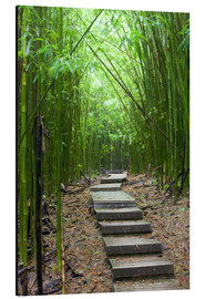 Aluminium print  Wooden path in the bamboo forest - Jim Goldstein