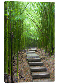 Canvas  Wooden path through a bamboo forest - Jim Goldstein