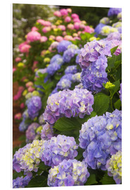 Foam board print  Hydrangea blossom in the garden - Joanne Wells