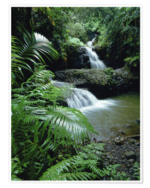 Premium poster  Waterfall in Hawaii - Douglas Peebles