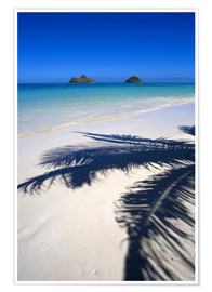 Premium poster  Palm shadow on Lanikai Beach - Douglas Peebles