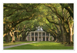 Premium poster  Alley lined with oak trees - Wendy Kaveney