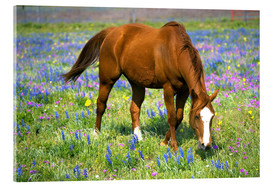 Acrylic glass  Horse on a meadow with wildflowers - Darrell Gulin