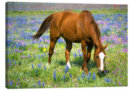 Canvas  Horse on a meadow with wildflowers - Darrell Gulin