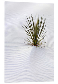 Acrylic glass  Yucca plant on a sand dune - Don Grall