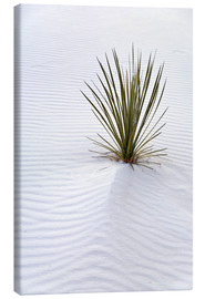 Canvas print  Yucca on sand dune - Don Grall