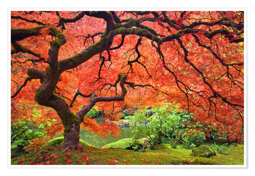 Premium poster Japanese sliced maple