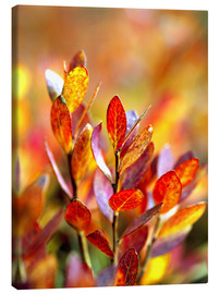 Canvas print  Red bilberry leaves - Ric Ergenbright