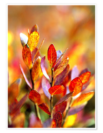 Premium poster Red bilberry leaves