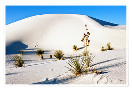 Premium poster  Dunes of White Sands - Bernard Friel