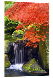 Acrylic print  Waterfall and Japanese Maple - Don Paulson