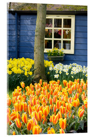 Acrylic print  Tulips in the Keukenhof in Lisse - Jim Engelbrecht