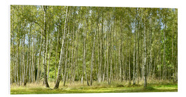 Foam board print  Birch forest - Atteloi