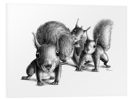 Foam board print  Three squirrel - Stefan Kahlhammer