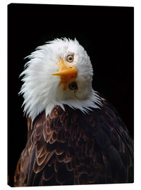 Canvas print  eagle - Wolfgang Dufner