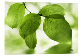 Acrylic print  Green leaves - Atteloi