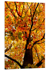 Foam board print  Autumn Tree - Atteloi