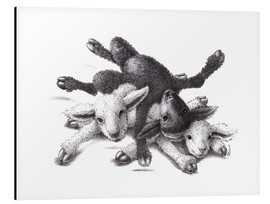 Aluminium print  Three Sheep - Ball Of Wood - Stefan Kahlhammer
