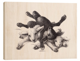 Wood print  Three Sheep - Ball Of Wood - Stefan Kahlhammer