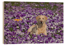 Wood print  Spring Labrador Retriever - Monika Leirich