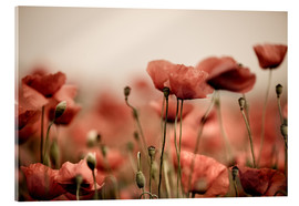 Acrylic print  Red poppy flowers 05 - Nailia Schwarz