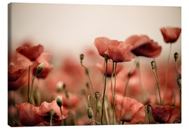 Nailia Schwarz - Red Poppy Flowers 05
