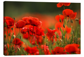 Canvas print  Red Poppy Flowers 14 - Nailia Schwarz