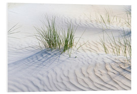 Foam board print  Dunegrasses in the sand - Jürgen Klust